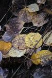 τα φύλλα στοκ εικόνα