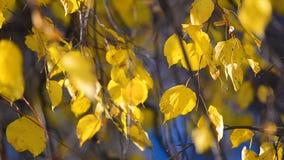 Τα φύλλα