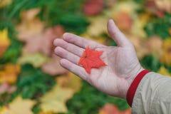 Τα φύλλα Malpe παραδίδουν μέσα το πάρκο πτώσης Στοκ Εικόνα
