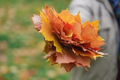 Τα φύλλα Malpe παραδίδουν μέσα το πάρκο πτώσης Στοκ Εικόνες