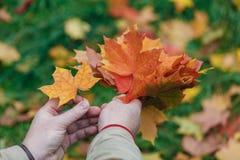 Τα φύλλα Malpe παραδίδουν μέσα το πάρκο πτώσης Στοκ εικόνα με δικαίωμα ελεύθερης χρήσης
