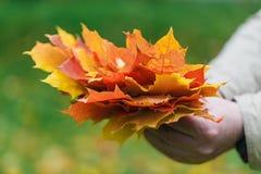 Τα φύλλα Malpe παραδίδουν μέσα το πάρκο πτώσης Στοκ Φωτογραφίες