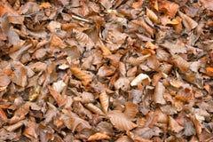 Τα φύλλα δέντρων ξεραίνουν Στοκ εικόνα με δικαίωμα ελεύθερης χρήσης