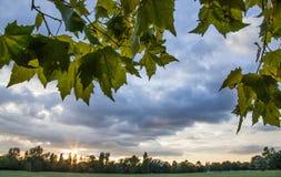 Τα φύλλα ενάντια στον ουρανό Στοκ εικόνες με δικαίωμα ελεύθερης χρήσης