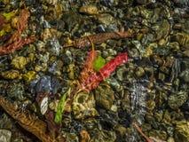 Τα φύλλα μέσα Στοκ Εικόνες