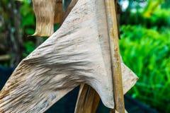 Τα φύλλα μπανανών ξεραίνουν Στοκ φωτογραφία με δικαίωμα ελεύθερης χρήσης