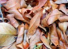 Τα φύλλα ξεραίνουν τους νεκρούς Στοκ Εικόνες