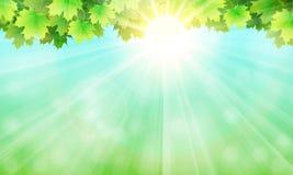 Τα φύλλα, ο ουρανός και ο ήλιος Στοκ Φωτογραφία