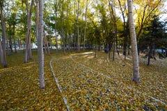 Τα φύλλα πτώσης στην πορεία Στοκ φωτογραφία με δικαίωμα ελεύθερης χρήσης
