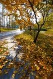 Τα φύλλα πτώσης στην πορεία Στοκ Εικόνα