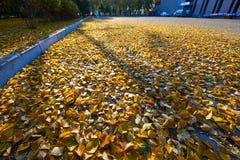 Τα φύλλα πτώσης στο έδαφος Στοκ φωτογραφίες με δικαίωμα ελεύθερης χρήσης