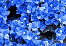Τα φύλλα σκούρο μπλε Στοκ Εικόνα