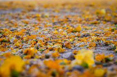 Τα φύλλα στο έδαφος Στοκ φωτογραφία με δικαίωμα ελεύθερης χρήσης