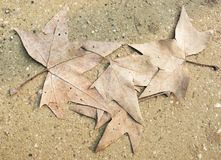 Τα φύλλα στο δρόμο Στοκ Φωτογραφία