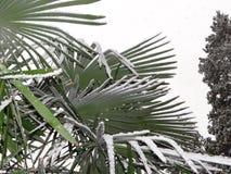 Τα φύλλα των φοινίκων στο χιόνι Στοκ φωτογραφίες με δικαίωμα ελεύθερης χρήσης