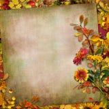 Τα φύλλα φθινοπώρου, ανθίζουν και μούρα σε ένα εκλεκτής ποιότητας υπόβαθρο Στοκ φωτογραφίες με δικαίωμα ελεύθερης χρήσης