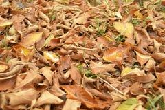 Τα φύλλα φθινοπώρου κάλυψαν τη γη Στοκ Φωτογραφία