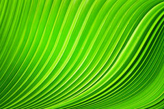 Τα φύλλα φοινικών Στοκ Εικόνες