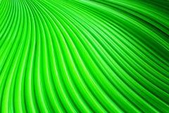 Τα φύλλα φοινικών Στοκ Εικόνα