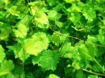 Τα φύλλα Στοκ φωτογραφίες με δικαίωμα ελεύθερης χρήσης