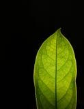 Τα φύλλα Στοκ Εικόνες