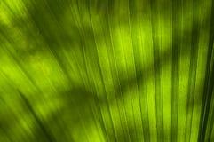 Τα φύλλα Στοκ εικόνα με δικαίωμα ελεύθερης χρήσης