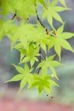 Τα φύλλα στοκ εικόνες με δικαίωμα ελεύθερης χρήσης