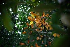 Τα φύλλα antumn σε ένα δέντρο στο πάρκο Στοκ εικόνα με δικαίωμα ελεύθερης χρήσης