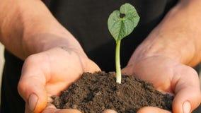 Τα χέρια ατόμων της Farmer κρατούν το έδαφος στο οποίο ο βλαστημένος νεαρός βλαστός φασολιών φιλμ μικρού μήκους