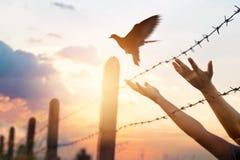 Τα χέρια γυναικών ελευθερώνουν το πουλί επάνω από έναν φράκτη καλωδίων οδοντωτό στοκ φωτογραφίες με δικαίωμα ελεύθερης χρήσης