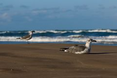 τα χέρια ζευγών παραλιών ανασκόπησης κρατούν seagulls το περπάτημα Στοκ φωτογραφία με δικαίωμα ελεύθερης χρήσης
