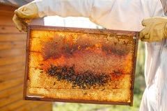 Τα χέρια κινηματογραφήσεων σε πρώτο πλάνο του μελισσοκόμου κρατούν το ξύλινο πλαίσιο με την κηρήθρα Συλλέξτε το μέλι Έννοια μελισ στοκ φωτογραφίες
