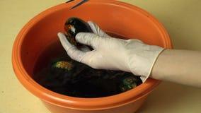 Τα χέρια με τα γάντια unwrap χρωμάτισαν το όμορφο αυγό Πάσχας απόθεμα βίντεο