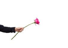 Τα χέρια που κρατούν ρόδινα αυξήθηκαν απομονωμένος Στοκ εικόνα με δικαίωμα ελεύθερης χρήσης