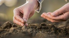 Τα χέρια της Farmer το σιτάρι στο χώμα Νέα έννοια ζωής στοκ φωτογραφία με δικαίωμα ελεύθερης χρήσης