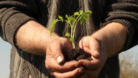 Τα χέρια του κηπουρού κρατούν το πράσινο σπορόφυτο στις παλάμες τους ενάντια στον ουρανό φιλικός προς το περιβάλλον νεαρός βλαστό απόθεμα βίντεο