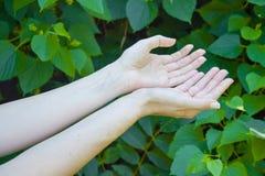 Τα χέρια του νέου κοριτσιού σε πράσινο βγάζουν φύλλα το υπόβαθρο Στοκ Εικόνες