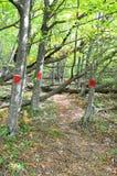 Τα χαρακτηρισμένα δέντρα στον τουρίστα σύρουν Sochi Εθνικό πάρκο Rus Στοκ φωτογραφίες με δικαίωμα ελεύθερης χρήσης