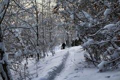 Τα χαρακτηριστικά ρωσικά εγκατέλειψαν το χιονισμένο χωριό στη χειμερινή ημέρα Στοκ Φωτογραφίες