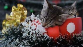 Τα χαριτωμένα γατάκια κοιμούνται μεταξύ των νέων διακοσμήσεων έτους ` s απόθεμα βίντεο