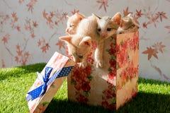 Τα χαριτωμένα γατάκια τίθενται μέσα σε ένα κιβώτιο δώρων στοκ εικόνες με δικαίωμα ελεύθερης χρήσης