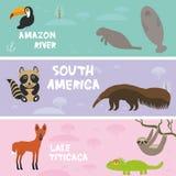Τα χαριτωμένα ζώα θέτουν anteater στη νωθρότητα αγελάδων θάλασσας manatee το toucan ρακούν χαμαιλεόντων Maned λύκος, υπόβαθρο παι Στοκ Φωτογραφίες