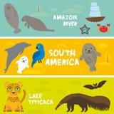 Τα χαριτωμένα ζώα θέτουν anteater τον ιαγουάρο σφραγίδων δελφινιών υάκινθων ροπάλων αγελάδων θάλασσας manatee macaw, υπόβαθρο παι Στοκ Φωτογραφία
