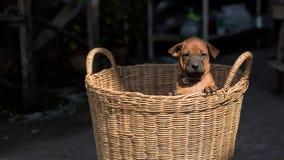 Τα χαριτωμένα μικρά σκυλιά θα συλλάβουν την καρδιά σας Στοκ φωτογραφία με δικαίωμα ελεύθερης χρήσης
