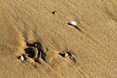 Τα χαλίκια και οι πέτρες έπλυναν επάνω στην άμμο στοκ φωτογραφία με δικαίωμα ελεύθερης χρήσης