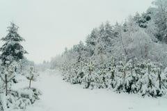 Τα χειμερινά δασικά δέντρα είναι πλήρη του χιονιού Ατμόσφαιρα Χριστουγέννων καλλιτεχνικά λεπτομερή οριζόντια μεταλλικά Παρίσι πλα Στοκ φωτογραφίες με δικαίωμα ελεύθερης χρήσης