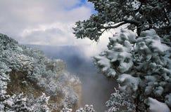 Τα χιονώδη δέντρα στη δύση περιβάλλουν το μεγάλο φαράγγι Στοκ φωτογραφία με δικαίωμα ελεύθερης χρήσης