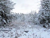 Τα χιονώδη ξύλα σε παλαιό σφυρηλατούν στοκ φωτογραφία με δικαίωμα ελεύθερης χρήσης