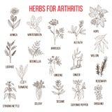 Τα χορτάρια για να παλεψουν το boswellia αρθρίτιδας, ιτιά, σέλινο, πιπερόριζα, arnica, andelica, αλφάλφα, λυκίσκος, licorice Στοκ φωτογραφίες με δικαίωμα ελεύθερης χρήσης
