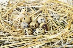 Τα χορτάρια και οι εγκαταστάσεις στο αυγό ορτυκιών ` s, τη φωλιά πουλιών ` s και τα αυγά, εικόνες των αυγών στα ορτύκια ` s τοποθ Στοκ εικόνες με δικαίωμα ελεύθερης χρήσης
